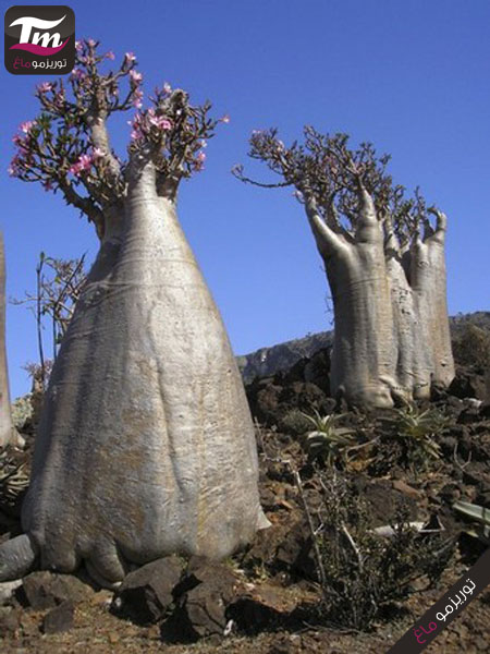 To match feature YEMEN-SOCOTRA